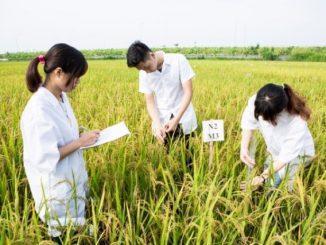 Ilustrasi: Mahasiswa agrikultur. (Ist.)