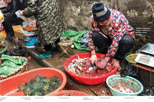 A man kills a fish in a wet market in Wuhan on January 05, 2020. China has imposed an immediate ban on the trade in wildlife (Photo: Simon Song/Graphic: South China Morning Post-SCMP)