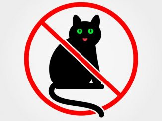 Ilustrasi: Kawasan bebas kucing. (Ist.)