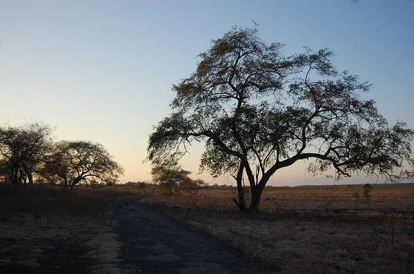 Keindahan alam Taman Nasional Baluran