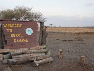 Savana Bekol yang menjadi salah satu bagian dari Savana Baluran, keindahan alamnya memiliki daya tarik tersendiri yang layak dinikmati. (Arlicia/KalderaNews)