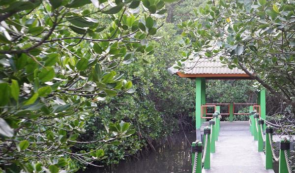 Jembatan dermaga mangrove nan rimbun yang menjadi jalan menuju gardu pandang di Pantai Bama. (Arlicia/KalderaNews)