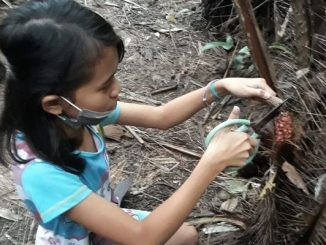 Peserta didik Tarakanita mengimplementasikan pendidikan karakter melalui pembiasaan berbagai aktivitas yang dilakukan di tengah keluarga dengan membantu pekerjaan anggota keluarga di kebun salak