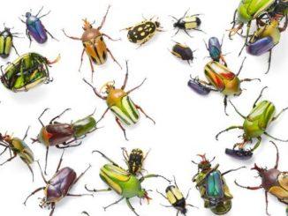 Ilustrasi: LIPI ungkap kepunahan serangga. (Ist.)