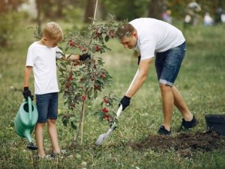 Ilustrasi orang tua menanam pohon bersama anak (KalderaNews/Ist).