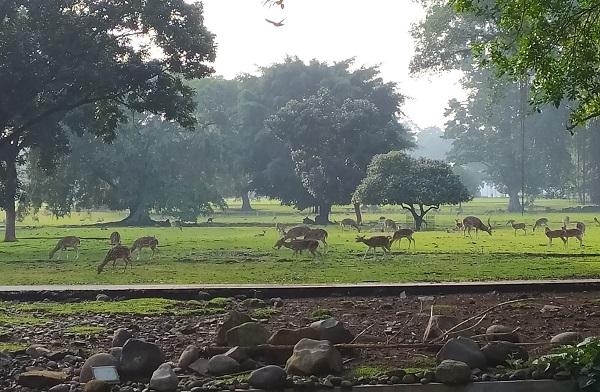 Keunikan Kebun Raya Bogor, khususnya Istana Bogornya, salah satunya karena keberadaan rusa-rusa yang didatangkan langsung dari Nepal dan tetap terjaga dari dulu sampai sekarang