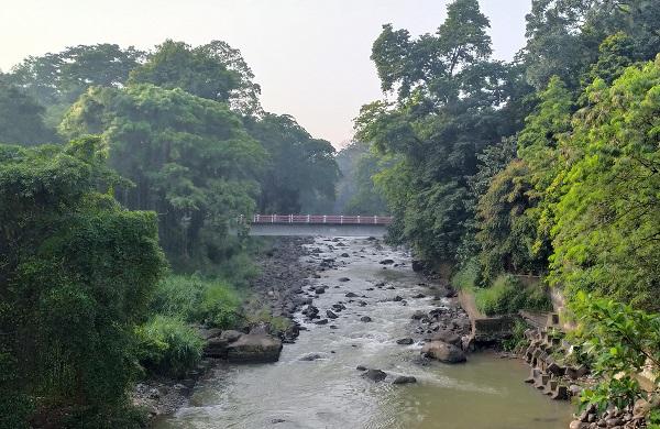 Aliran sungai terlihat alami dengan rindang pohon-pohon hijau di Kebun Raya Bogor
