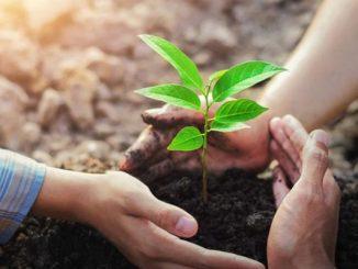 Ilustrasi: Hari Gerakan Sejuta Pohon Sedunia 2021. (KalderaNews.com/Ist.)