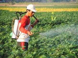 Ilustrasi: Mahasiswa UMM mengajak petani memanfaatkan limbah tembakau menjadi pestisida. (KalderaNews.com/Ist.)