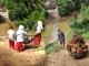 Lokasi dalam video itu berada di Sungai Siantan yang terletak di perbatasan antara Desa Kuntu dan Desa Kuntu Darussalam, Kampar Kiri, Kabupaten Kampar, Provinsi Riau
