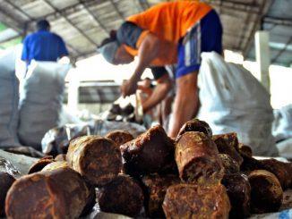Produsen Gula Kelapa di Pacitan Jawa Timur