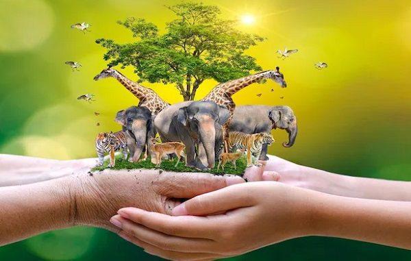 Ilustrasi: Hari Hak Asasi Binatang. (KalderaNews.com/Ist.)